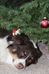 "Pets And ""Presents"" to Avoid This Xmas"
