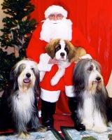 Santa Paws IsComing